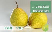 フルーツ王国余市産「千両梨」10kg【ニトリ観光果樹園】
