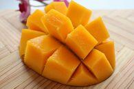 【先行予約】【2021年発送分】お日様の恵み。奄美のあま~い絶品マンゴー(1.2kg/優品)家庭用
