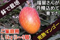 【ご家庭用】鉢で栽培したおしゃれな完熟マンゴー(大崎産)