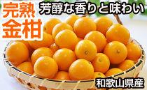 完熟金柑(きんかん)3kg(和歌山県産)
