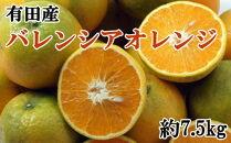 【先行予約】【数量限定】有田産濃厚バレンシアオレンジ約7.5kg(M~2L)