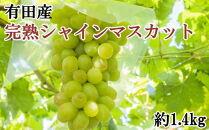 【先行予約】【数量限定】和歌山有田産完熟シャインマスカット約1.4kg