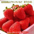 紀州和歌山ブランドいちご「まりひめ」約280g×2P