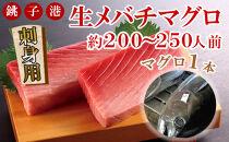 生メバチマグロ1本 45~50kg