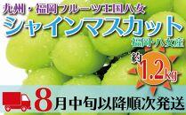 九州・福岡フルーツ王国八女から直送!シャインマスカット(約1.2kg)