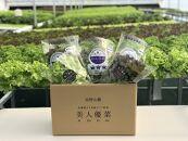 高野山麓 美人優菜 乳酸菌入り高級サプリ野菜詰合せ