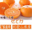 柑橘の王様和歌山有田の濃厚せとか(ご家庭用)