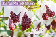 【7月26日~27日発送】柏原ぶどう デラウエア2kg箱