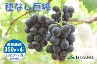 種なし巨峰【350g×4パック】7月上旬より発送予定