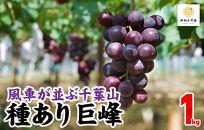 【先行予約】有田の種あり巨峰1kg和歌山県産産地直送クール便対応