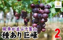 【先行予約】有田の種あり巨峰2kg和歌山県産産地直送クール便対応
