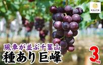 【先行予約】有田の種あり巨峰3kg和歌山県産産地直送クール便対応