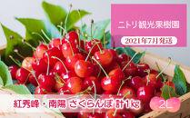 フルーツ王国余市産「紅秀峰」・「南陽」2Lサイズ各500g合計1kg【ニトリ観光果樹園】