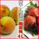 <R4年6月発送>【梅干し・梅酒用】熟南高梅(生青梅)4Lサイズ2kg箱