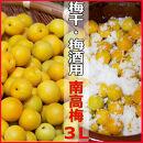 <R4年6月発送>【梅干し・梅酒用】熟南高梅(生青梅)3Lサイズ2kg箱