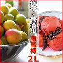 <R4年6月発送>【梅干し・梅酒用】熟南高梅(生青梅)2Lサイズ2kg箱