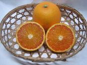 タロッコ(ブラッドオレンジ) 2.5kg M~2L混合(8~14玉)