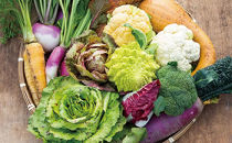 イタリア野菜(西洋野菜・珍野菜)セットショート(7品)