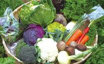 よしのがり野菜セットレギュラー(12品)