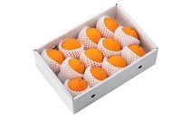 有田産箱詰めネーブルオレンジ 1段