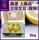厳選上級品土佐文旦(露地)/5kg/箱/元木青果