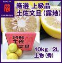 厳選上級品土佐文旦(露地)/10kg/2L上物(秀)/元木青果/