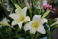 沖永良部島で大切に育てられた えらぶユリ・グラジオラス切り花(上)セット