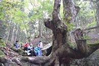 農家民宿宿泊と国定公園の森散策