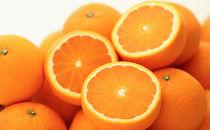箱詰め有田産完熟清見オレンジ