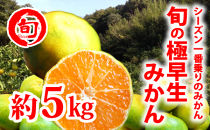 旬の極早生みかん 約5kg 旬の味覚市場【極早生みかん】