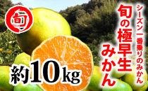 旬の極早生みかん 10kg 旬の味覚市場【極早生みかん】