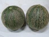 <限定>アムスメロン 2kg 「生育時期に農薬を極力使わずに育てました!」<2020年5月下旬配送>