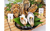 厚岸産殻付牡蠣丸L&丸LLセット