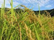 【令和2年産】JAみなみ魚沼の最高峰JAS有機栽培米南魚沼産コシヒカリ10kg