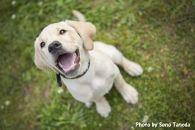 盲導犬訓練支援寄付③「行きたい場所に安心して行ける社会に…」