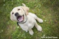 盲導犬訓練支援寄付①「行きたい場所に安心して行ける社会に…」