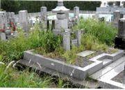 【ポイント交換専用】親孝行代行サービス 墓地の除草作業