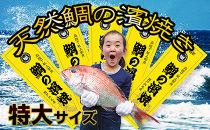 [朝廷献上品]<瀬戸内海産>天然鯛の浜焼き【特大サイズ】