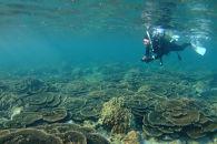サンゴの海で【体験ダイビング】インストラクター付き2名様