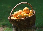 BJ02浦賀産レモン5kg
