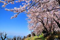 みとよの絶景ポストカード紫雲出山の桜