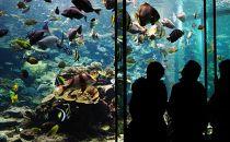 【ポイント交換専用】串本海中公園水族館&海中展望塔入場ペア券