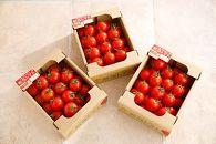 朝恋トマト(ミディトマト) 1kg×3箱【AA06SM-C】