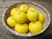 【数量限定】【期間限定】~柚子香る農園からの贈り物~和歌山古座川産松林農園のゆず5kg