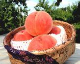 溢れるほどの旬を食す もも/あかつき2kg(6玉~8玉)