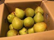 フルーツ王国余市産「千両梨」10kg