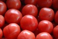 糸島産 絶品トマト(4kg入り)10月より配送開始