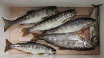 ≪玉川漁協≫アマゴ釣り遊漁承認証(年券:1枚)