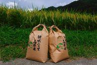 【特選】新城米(きぬひかり5kg)<2020年収穫>