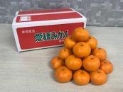 ≪予約受付中≫柑橘王国愛媛産温州みかん【早生】5kg